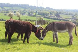 The Donkey Sanctuary Open Day